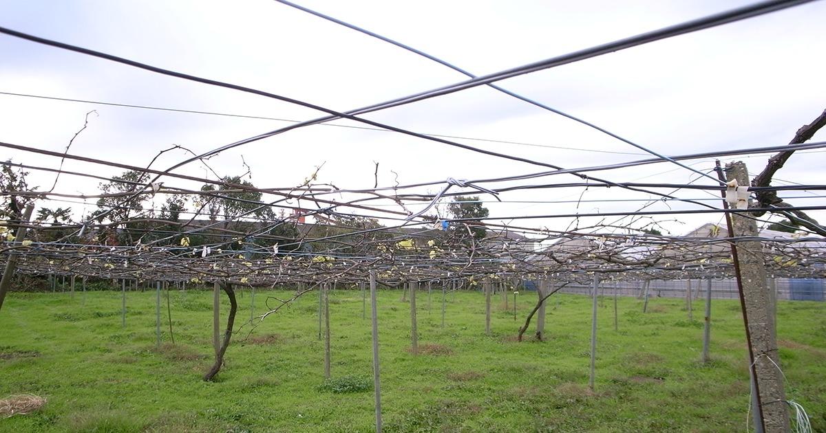 千葉県唯一のワイナリー!齊藤ぶどう園は愛にあふれるワイナリーだった。