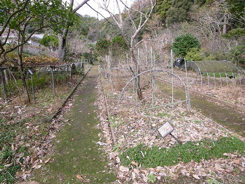 エントランスを抜けると早速薬草を発見。冬なので少々迫力に欠ける。
