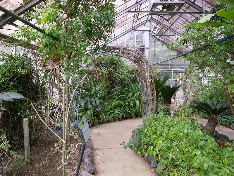 温室には熱帯植物。アロエやコーヒーノキなど。